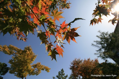 Fall leaves at Choong Ang Boys High School, Seoul, South Korea