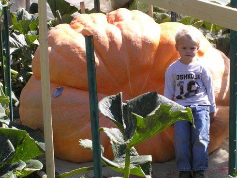 world_largest_pumpkin